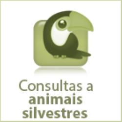 icon-animais-silvestres